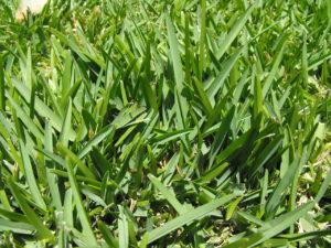 fertilizer-spreader11